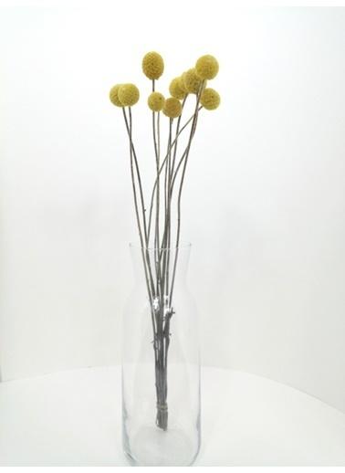Kuru Çiçek Deposu Sarı (Natural) 10 Adet Crespedia Kuru Çiçek Sarı